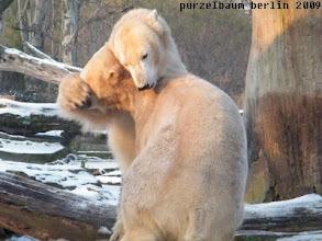 Photo: Haelt sie Knut doch glatt die Augen zu ;-)