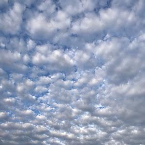 エルグランド TE52のカスタム事例画像 バカボンパパさんの2020年10月07日16:56の投稿