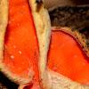 scarlet cup fungus or scarlet elf cap.