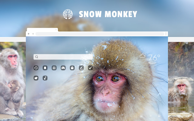 Snow Monkey HD Wallpapers New Tab Theme