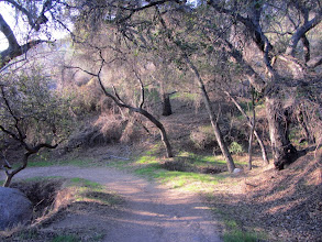 Photo: Entering the riparian section of Colby Trail