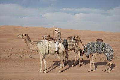 Junger Hirte mit Kamelen in der Wahiba
