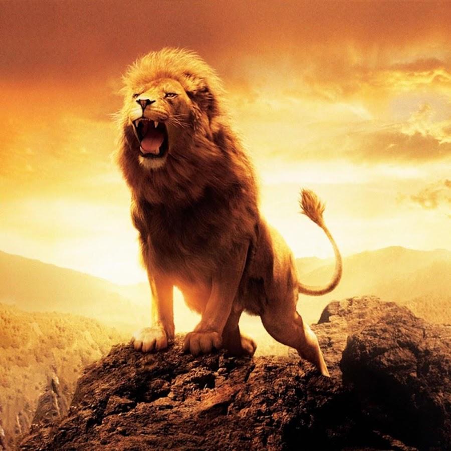 Leone sfondi animati app android su google play for Sfondi leone