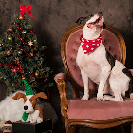 by Myra Brizendine Wilson - Animals - Dogs Portraits ( pets, canine, dog,  )