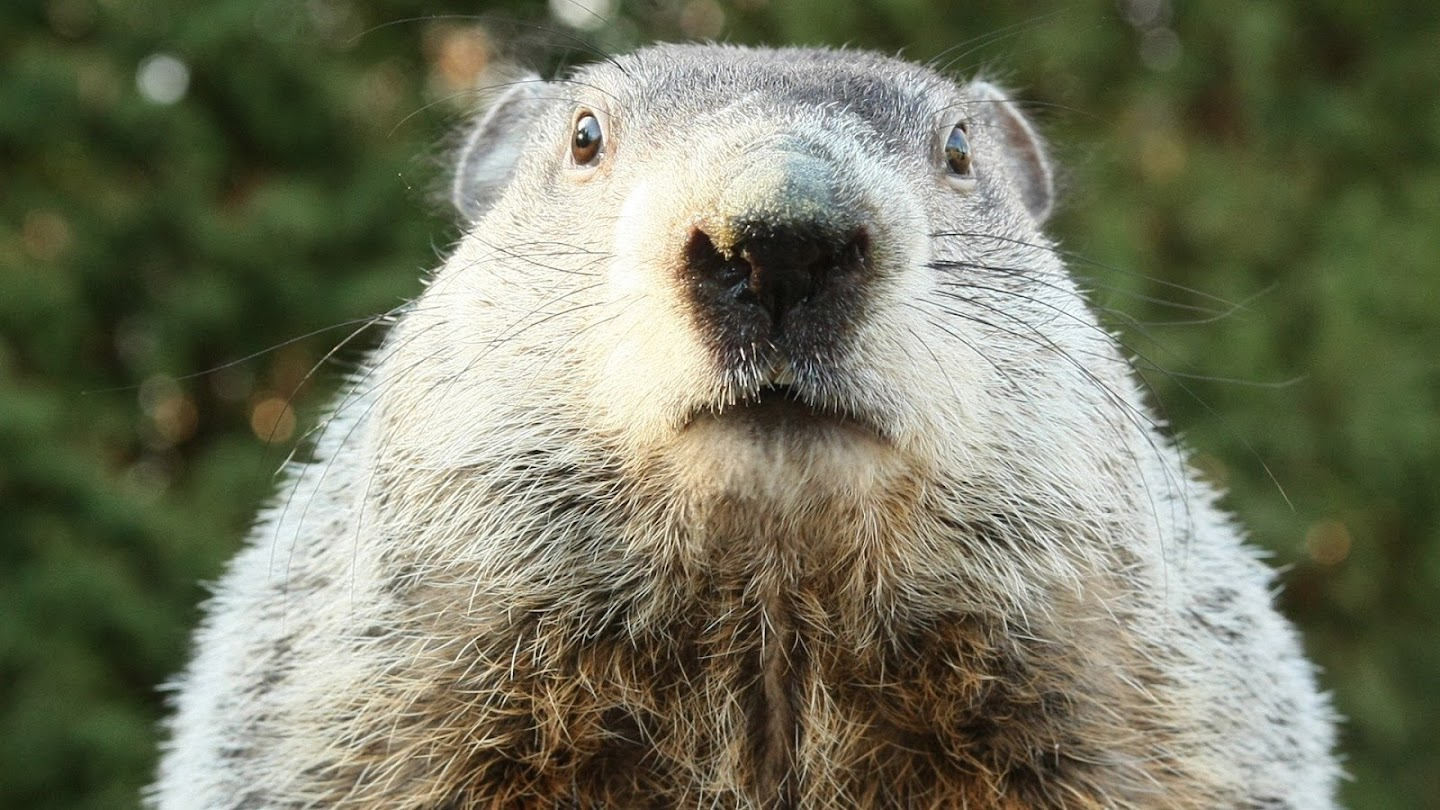 Watch A Groundhog Day Story live