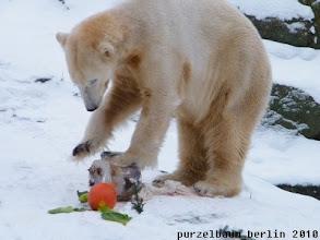 Photo: Irgendwie muss die Eistorte doch zu knacken sein ;-)