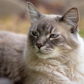 CATTT by Karoner Gaming - Animals - Cats Portraits