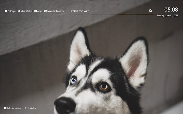 Husky Wallpaper HD New Tab Theme©