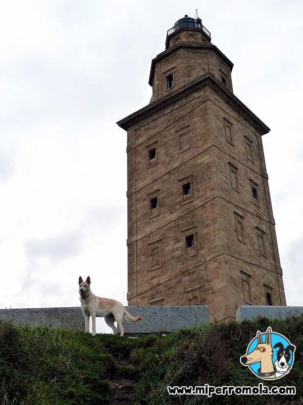 Senderismo con Perro en la Torre de Hércules con un Can de Palleiro