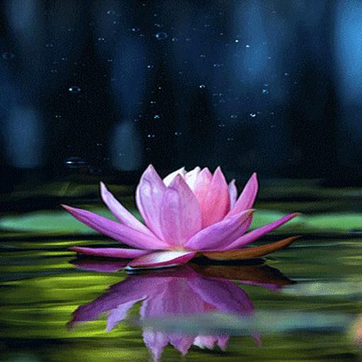 Magical Lotus Live Wallpaper
