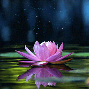 Magical Lotus Live Wallpaper download