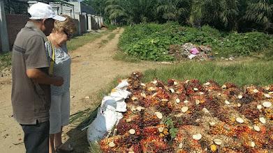 Photo: Herfra fremstilles palmeolie