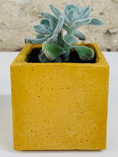 plante dans pot design en béton