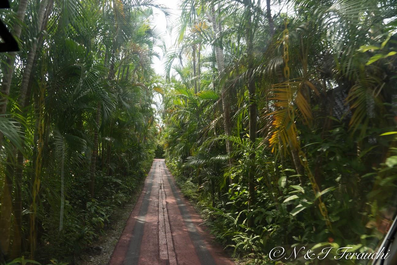 まるでジャングルの冒険