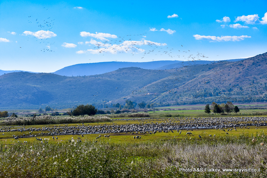 Пейзажи Израиля. Долина Хула.