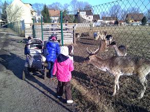 Photo: Feeding animals in a local animal farm.