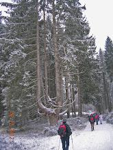 Photo: arbre remarquable à proximité de la Rosselquelle
