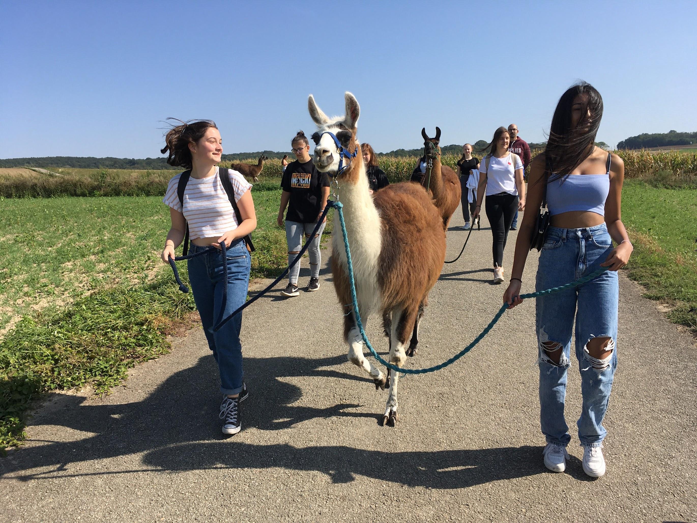 Und sie spucken doch (nicht) – die Lamas und wir