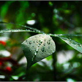 Water Drops by Kenny Sutan Sati - Nature Up Close Leaves & Grasses