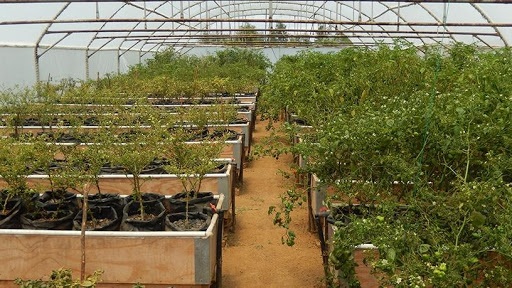 Vegetables flourishing at the pilot aquaponics farm near Pretoria.