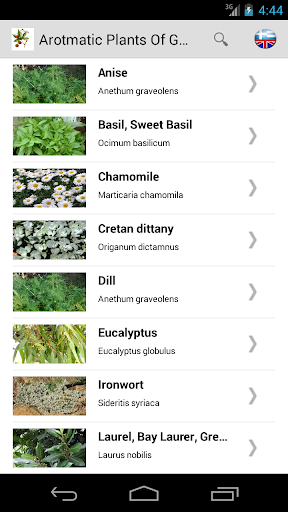 Aromatic Plants Of Greece