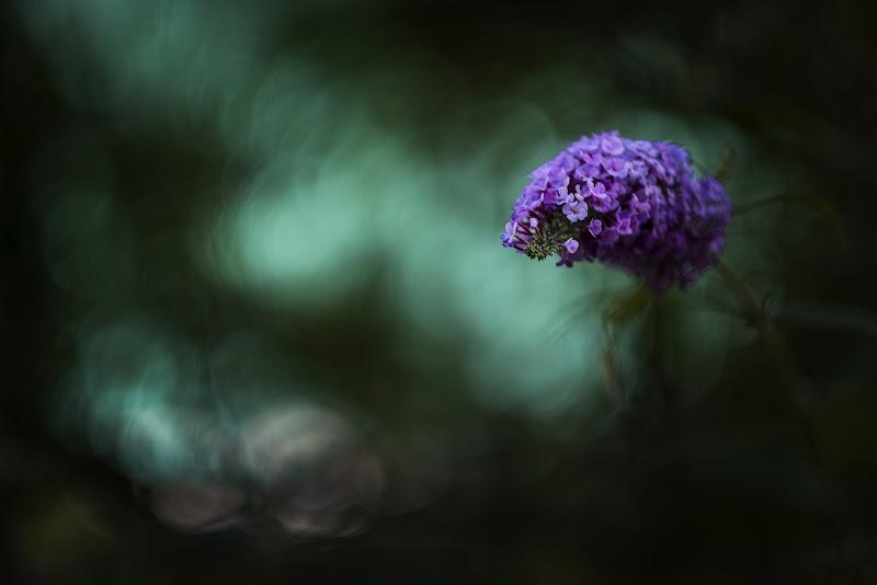 il fiore viola di Giovi18