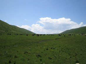 Photo: Between Chengdu and Gansu, in the grasslands. Those are yaks.