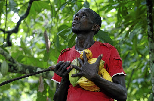 A farmer carries cocoa pods at a farm in Agboville, Ivory Coast. Picture: REUTERS