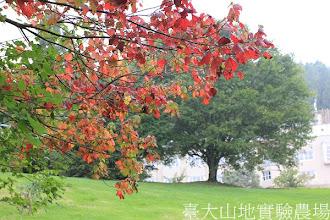 Photo: 拍攝地點: 梅峰-伴月坡 拍攝植物: 裡白槭(前-紅色)與青楓(後-綠色) 拍攝日期:2012_08_30_FY
