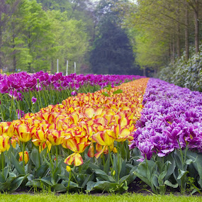 by RAJ (Constantinescu) Kapoor (Adrian Radu) - Flowers Flower Gardens