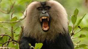 Rajan Monkey on a Mission thumbnail