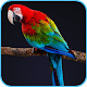 HD Parrot Wallpaper for PC-Windows 7,8,10 and Mac