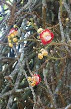 Photo: flowering tree