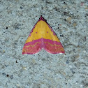 Pink-bordered Yellow Moth