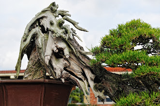 Photo: This is extreme bonsai!