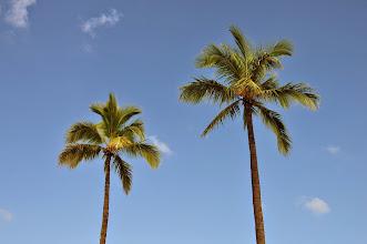 Photo: Palm trees.