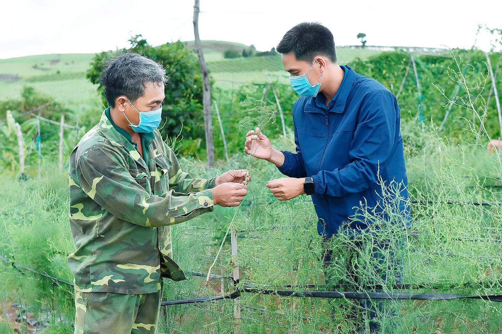 4.Cán bộ kỹ thuật Trung tâm Dịch vụ nông nghiệp hướng dẫn hộ dân tham gia dự án chăm sóc cây măng tây.