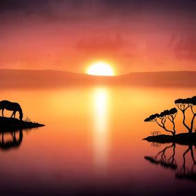 The Horse at Sunset by Jennifer Woodward - Digital Art Places ( animals, horses, silhouette, sunset, horse, wildlife, sunrise )