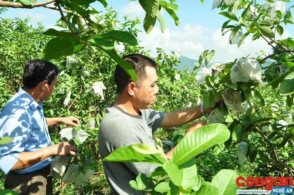 Nhiều mô hình kinh tế do nông dân làm chủ đóng góp tích cực vào quá trình xây dựng NTM trên địa bàn tỉnh
