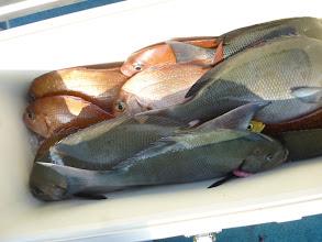 Photo: こちらもオナガに真鯛!