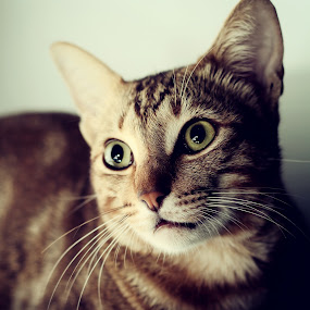 i  see u by Gilang Ariefian Gutama - Animals - Cats Portraits