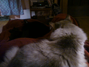 Photo: Risu and Herc crowding my lap