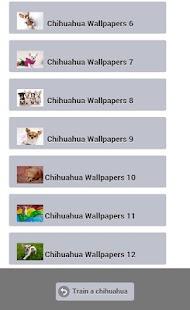 Train a Chihuahua screenshot