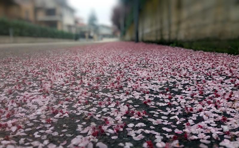 Strade di petali di Vera