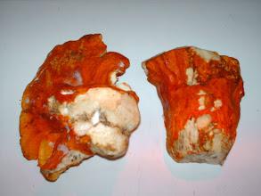 Photo: Lobster mushroom/ Dermatose de la russule