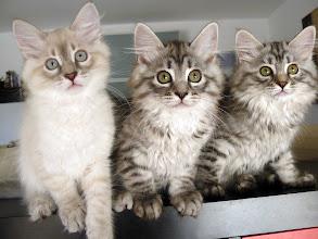 Photo: Un trío! Quinlan, Quimey y Pluma (Quenya) 81 días