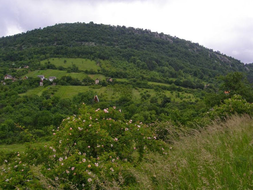 Hrušovská lesostep