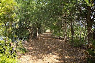Photo: Pathway @ Wakodahatchee Wetlands, FL - http://photo.leptians.net