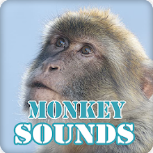 Monkey Sounds Ringtone Collection Download on Windows
