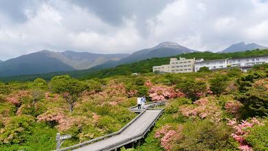 Photo: バックは茶臼岳